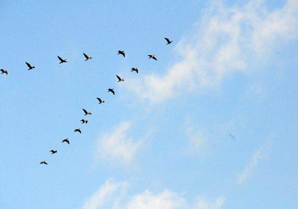 גן עדן לציפורים בעמק המעיינות