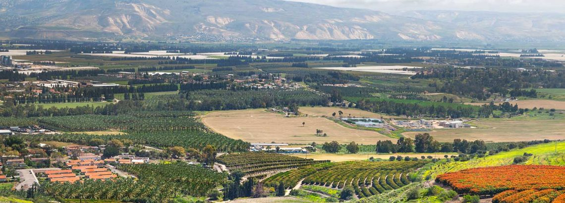 פריחות החורף בעמק הירדן