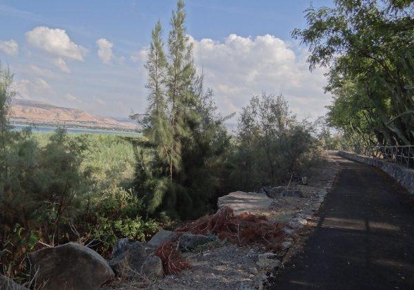 שביל סובב כנרת – מחוף שקמים לטבריה