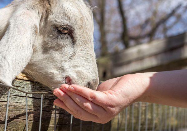 2 אתרים מדליקים להכרות עם בעלי חיים בעמק הירדן