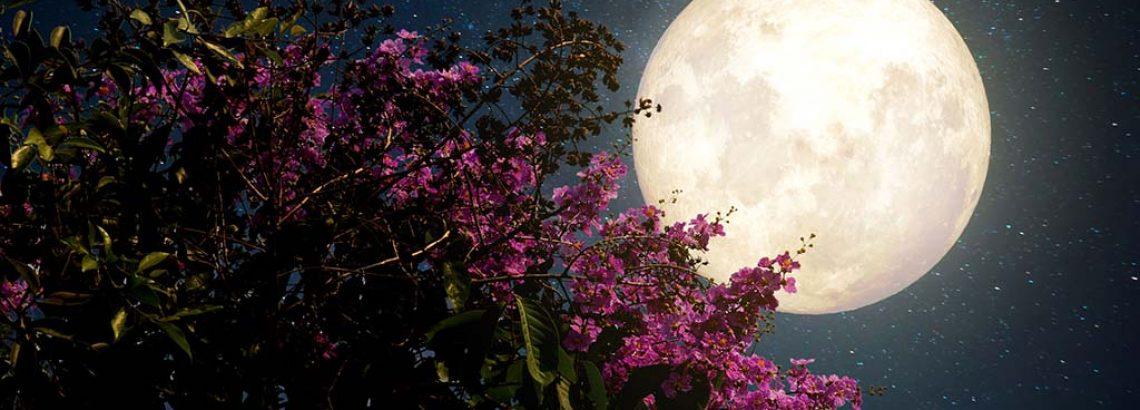 לילה לבן בעמק המעיינות   6.7.17