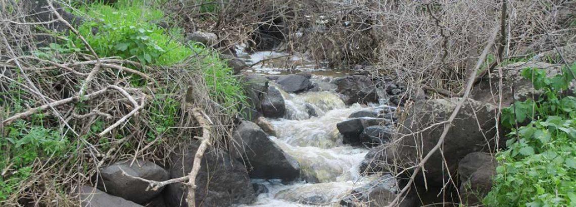 שמורת רכס אדמי – שרידים, מעיינות ופריחות